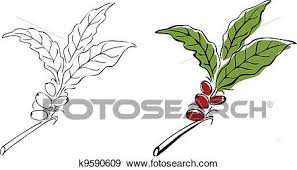 Clip Art Of Hand Drawn Coffee Tree Branch K9590609