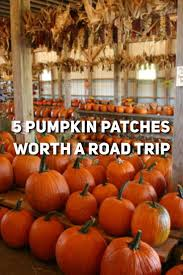 Patterson Pumpkin Patch Nc by 29 Best Ideas For Pumpkin Patch Images On Pinterest Pumpkins