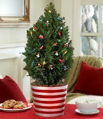 weihnachtsbaum im topf festliche deko schöner zusatz zum garten