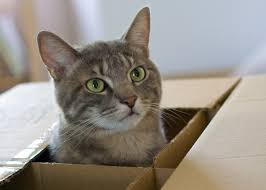 cat in house moving house with your cat