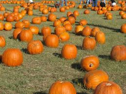 Flower Mound Pumpkin Patch Flower Mound Tx by Die Besten 25 Flower Mound Pumpkin Patch Ideen Auf Pinterest