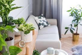 zimmerpflanzen 4 pflanzen gegen stress müdigkeit