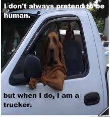 Trucker Meme - 2018 Images & Pictures - Paid To Stare Out The Window ... Some Of The Funniest Things Written On Cars Eitheror Guff Truck Quotes Quotes Of The Day Dirty Diesel Funny Sticker Decal Ideal For Vw Bora Lupo Golf Mk4 Funnysloganruckweirndiapostersnampicfreedom251jokes Keep Home Simple Bathroom Molding All By Myself Funny Driver Sayings 1947 Dodge Power Wagon Wdx Pick Up Husband Is Shocked When He Gets This Horrifying Email From His Wife Crazy Daze Nite Dreams Sotimes I Wish My Car Horn Was A Train Sign Pics 1 Free Hd Wallpaper Funnypictureorg Slogan Behind Indian Trucks Youtube