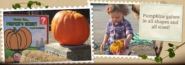 Nearest Pumpkin Patch Shop by Walter U0027s Pumpkin Patch Corn Maze And Family Farm In El Dorado
