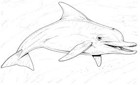 Free Printable Miami Dolphins Coloring Pages Dolphin Happy Full Size