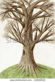 Gallery For Tree Drawing Color Pencil