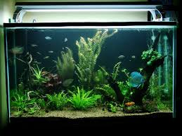 How To Set Up Simple Aquascape With Iwagumi Style - AQUASCAPER How To Set Up An African Cichlid Tank Step By Guide Youtube Aquascaping The Art Of The Planted Aquarium 2013 Nano Pt1 Best 25 Ideas On Pinterest Httpwwwrebellcomimagesaquascaping 430 Best Freshwater Aqua Scape Images Aquascape Equipment Setup Ideas Cool Up 17 About Fish Process 4ft Cave Ridgeline Aquascape A Planted Tank Hidden Forest New Directly After Setting When Dreams Come True