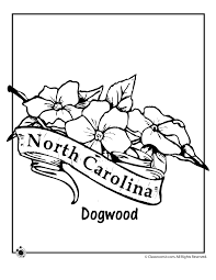 State Flower Coloring Pages North Carolina Page Classroom Jr