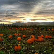 Denver Area Pumpkin Patches by Don U0027t Miss These 14 Pumpkin Patches In Virginia This Fall