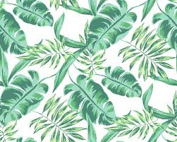 Jungle Leaves Free Wallpapers Backgrounds