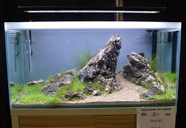 Aquascaping Live! 2016 - Large Tank Entries & Results Aquascaping Aquarium Ideas From Aquatics Live 2012 Part 2 Youtube How To Make Trees In Planted Aquarium The Nature Style Planted Tank Awards Ultimate Shop In Raipur Fuckyeahaquascaping My 90p Tank One Month See Day 1 Here Best 25 Ideas On Pinterest Home Design Designs Aquascape Happy Journey By Adil Chaouki 1ft Cube Aquascaping Fuck Yeah Anyone Do For Your Fish Srt Hellcat Forum Archives Javidecor
