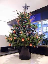 Christmas Tree 10ft by Live Christmas Trees For Rent From Superplants Superplants