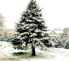 7 Ft Pre Lit Christmas Tree Argos by 7ft Christmas Tree U2013 Suipai Me