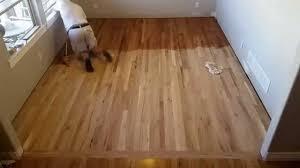 Restain Hardwood Floors Darker by Fastest Way To Stain Hardwood Flooring Youtube