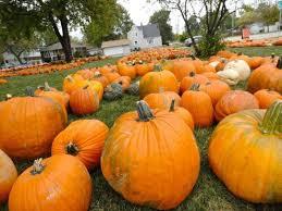 Pumpkin Farm Illinois Best by First United Methodist Church Of Oak Lawn Offers Pumpkins Of All