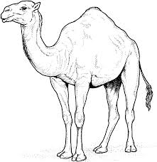 Dromedary Arabian Camel Coloring Page From Camels Category Select 27336 Printable Crafts Of Cartoons Nature Animals Bible And Many More