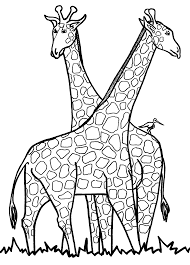 Special Giraffe Coloring Page 50