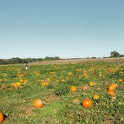 Free Pumpkin Patch In Fredericksburg Va by Belvedere Plantation 22 Photos U0026 27 Reviews Festivals 1410