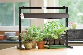fluorescent lighting best fluorescent light for plants indoor