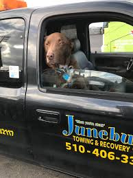 100 Tow Truck San Francisco Would Kill To Have This Doggo Pick Me Up In A Tow Truck