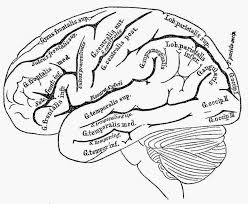 Anatomy Coloring Book Brain Page