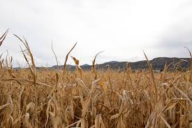 Chatfield Pumpkin Patch Hours by Your Guide To Fall Fun Where To Find Corn Mazes Pumpkin Patches