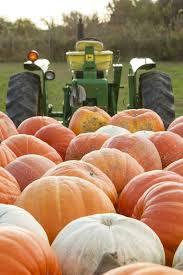 Pumpkin Picking Riverhead by Long Island Cheese Squash Fall Winter Recipes Pinterest Long