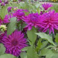 fall flowering bulbs flowers ideas for review