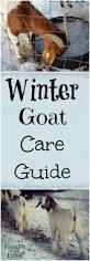 Loafing Shed Kits Utah by Best 25 Goat Shed Ideas Only On Pinterest Goat Shelter Goat