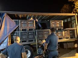 100 Truck Value Estimator Two Suspects Arrested In Touwsriver With A Truckload Of Abalone To