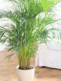 Indoor fice Plants No Light
