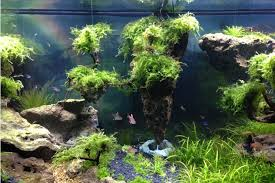 Ode To Avatar - My First Attempt At Aquascaping | 190035 Aquascape Waterfall Tjupinang Part 2 Youtube Modern Aquarium Design With Style For New Interior Aquascape Low Cost My Waterfall Nhaquascape Pro Pondwater Feature Pumpschester Rockingham Diy Pondless Waterfallsbackyard Landscape Ideasmonmouth Nj Aqualand Nighttime Winter By Inc Photo Projectswarwickorange Countynynorthern Its Called Strenght Of A Thousand Stone Backyard Waterfalllow Maintenance Water Just Add And Patio Amazoncom Kit 3 W Free Led 3light