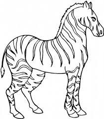 Stallion Zebra Coloring Page