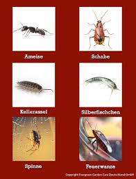 nexa lotte ultra ungezieferspray kontaktspray gegen ungeziefer auf flächen und in ritzen gegen ameisen schaben silberfische und andere kriechende