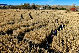 Pumpkin Patch Colorado Springs 2015 by Pumpkin Patches Corn Mazes Farmers Markets U0026 Other Fall Fun In