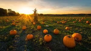 Colorado Pumpkin Patch Farm Camp by Pumpkin Patches In The Midwest