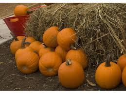 Nearest Pumpkin Patch Shop by Five Pumpkin Patches Near Kennesaw Kennesaw Ga Patch