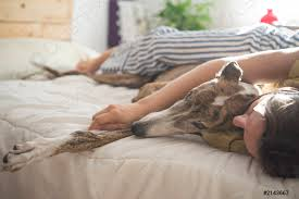 foto auf lager frau und hund im schlafzimmer