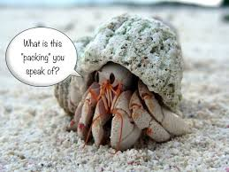 Do Hermit Crabs Shed Legs by 157 Best Hermit Crabs Images On Pinterest Hermit Crabs Hermit