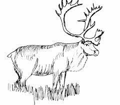 Free Printable Elk Animals