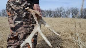 Elk Shed Hunting Utah by Shed Antler Hunting Ban Issued In Several Western States