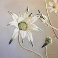 100 Flannel Flower Glass Flannelflower 1163720170324075902Dennison_