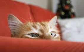 cat sofa cat sofa 7031468
