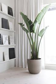 cool green plant coole grünpflanze plants livingroom