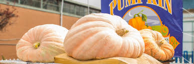 Half Moon Bay Pumpkin Patch 2017 by 2 363 Pound Gourd Sets New American Record At Pumpkin Weigh Off
