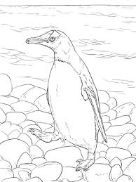 Click To See Printable Version Of Gentoo Penguin Walks Coloring Page