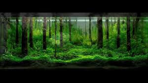50 AQUASCAPE TERBAIK - YouTube Aquascape Designs For Your Aquarium Room Fniture Ideas Aquascaping Articles Tutorials Videos The Green Machine Blog Of The Month August 2009 Wakrubau Aquascaping World Planted Tank Contest Design Awards Awesome A Moss Experiment Driftwood Sale Mzanita Pieces Two Gardens By Laszlo Kiss Mini Youtube Warsciowestronytop