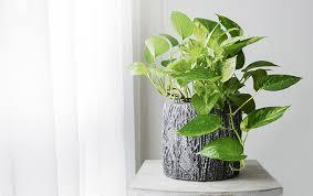 pflanzen für das schlafzimmer irßlinger gmbh co kg