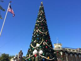 Christmas Tree Species Usa by Mouseplanet Walt Disney World Fun Facts From 2001 By Jim Korkis