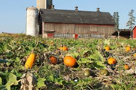 Top Pumpkin Farms Wisconsin by Pumpkin Patches Fall Travel Series U2013 Katie Jane Interiors
